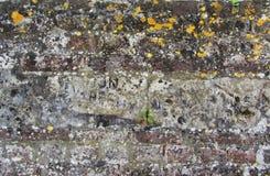 Bakgrund av den smutsiga tegelstenväggen för gammal tappning med skalningsmurbruk, textur Royaltyfri Fotografi