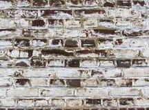 Bakgrund av den smutsiga tegelstenväggen för gammal tappning med skalningsmurbruk, textur Royaltyfri Foto