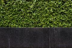 Bakgrund av den svarta granitstenbänken framme av häcken Arkivfoto