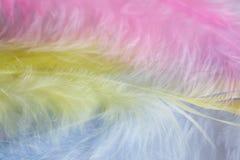Bakgrund av den övre bilden för slut av fjädrar för pastellfärgade rosa färger, guling- och blått Arkivbild