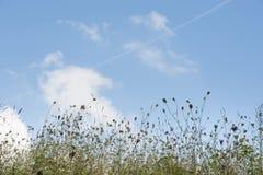 Bakgrund av det blandade blommafältet med himmel och moln royaltyfria foton