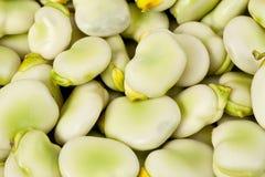Bakgrund av det gröna bondbönaslutet upp Royaltyfria Foton