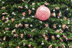 Bakgrund av det gröna julträdet Arkivfoton