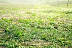 Bakgrund av droppar på ljust - grönt gräs i morgonen Royaltyfria Bilder