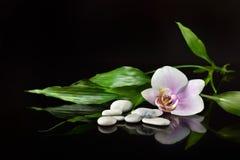 Bakgrund av en brunnsort med stenar, orkidéblomman och en kvist av bambu fotografering för bildbyråer
