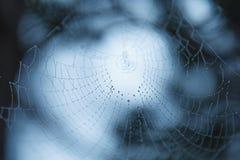 Bakgrund av en spindelnät för spindelrengöringsduk mot bakgrunden av skogen och träd arkivfoton