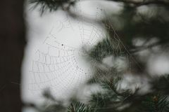 Bakgrund av en spindeln?t f?r spindelreng?ringsduk mot bakgrunden av skogen och tr?d fotografering för bildbyråer