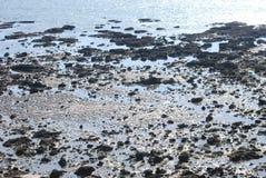 Bakgrund av en strand Fotografering för Bildbyråer