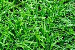 Bakgrund av en textur för grönt gräs, textur för grönt gräs från ett fält royaltyfria foton