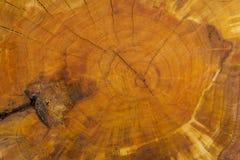 Bakgrund av en trädstam Arkivfoton