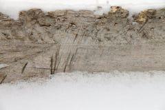 Bakgrund av ett gammal träd och snö Arkivfoto