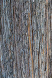 Bakgrund av ett gammalt trädskäll Arkivbild