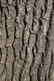 Bakgrund av ett gammalt trädskäll Arkivfoton