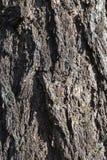 Bakgrund av ett gammalt trädskäll Royaltyfria Foton