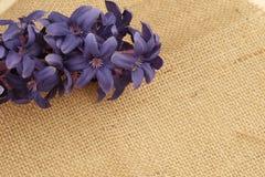 Bakgrund av ett texturerat brunt bomullstyg royaltyfria foton
