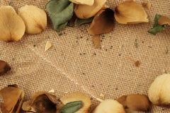 Bakgrund av ett texturerat brunt bomullstyg royaltyfri fotografi