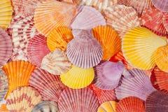 Bakgrund av färgrika havsskal Arkivbild