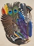 Bakgrund av fågelfjädrar i blandade färger och former Royaltyfria Bilder
