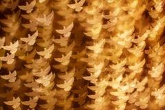 Bakgrund av fåglar Royaltyfria Foton