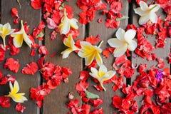 Bakgrund av frangipaniblommor Royaltyfria Foton