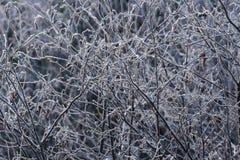 Bakgrund av frost på etikettsalar Royaltyfria Bilder