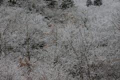 Bakgrund av frostade träd i vinter i Pyreneesna Arkivbild
