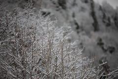 Bakgrund av frostade träd i vinter i Pyreneesna Arkivfoto