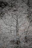 Bakgrund av frostade träd i vinter i Pyreneesna Arkivbilder