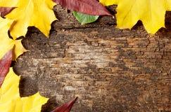 Bakgrund av gammala träplankor Arkivbilder