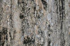Bakgrund av gammalt trä texturerar Arkivfoton
