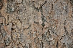 Bakgrund av gammalt trä texturerar Royaltyfri Fotografi