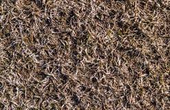 Bakgrund av gräs Arkivbild