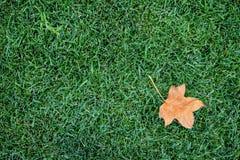 Bakgrund av gräsmatta med höstbladet royaltyfria foton