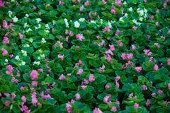 Bakgrund av gräsplansidor och blommor royaltyfria foton