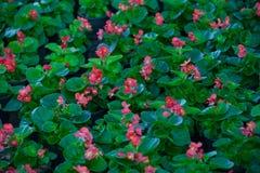 Bakgrund av gräsplansidor och blommor arkivfoton