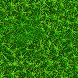 Bakgrund av grön mossa seamless textur royaltyfri bild