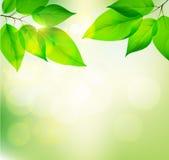 Bakgrund av gröna sidor Fotografering för Bildbyråer