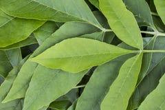 Bakgrund av gröna sidor Arkivbilder