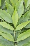 Bakgrund av gröna sidor Arkivbild