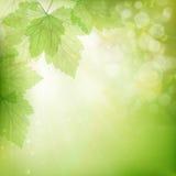 Bakgrund av gröna sidor 10 eps Arkivbild