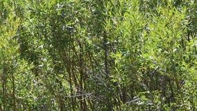 Bakgrund av gröna träd i bris