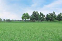 Bakgrund av grönt gräs med trädet Royaltyfria Bilder