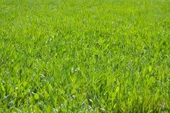 Bakgrund av grönt gräs som fotograferas på en solig dag Arkivbilder