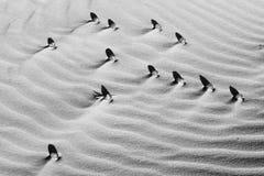Bakgrund av härligt, texturer och modeller på krusig sand och skugga av stenar öken sahara Monochromatic svartvitt royaltyfri foto