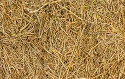 Bakgrund av hö och torrt gräs Royaltyfri Fotografi