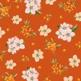 Bakgrund av havsbuckthornen och blommor Arkivfoto