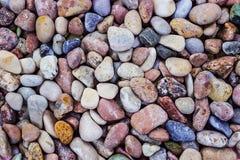 Bakgrund av havsstenar Arkivfoton