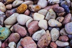 Bakgrund av havsstenar Arkivfoto