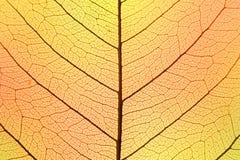 Bakgrund av hösten färgar bladcellstrukturen - naturlig textur Arkivfoton