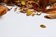 Bakgrund av isolerade Autumn Leaves - ställe för din design, text royaltyfria bilder